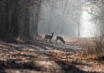 Führung à point_Auf der Pirsch Bild: Shutterstock